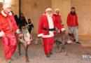Le renne sono arrivate nel Borgo Antico di Cerignola