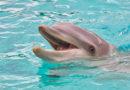 Torre Mileto: ritrovata la carcassa di un delfino spiaggiato