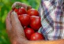 Confagricoltura chiede una proroga della presentazione dei Piani Annuali di Produzione per il biologico
